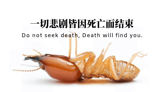 如何消灭白蚁?how to get rid of termites