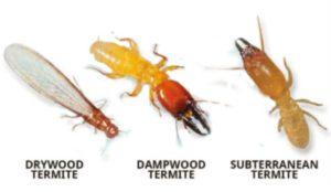 白蚁的种类