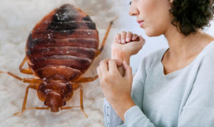 how to get rid of bed bug