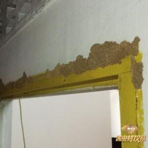 Termite In Door Frame 如何消灭白蚂蚁