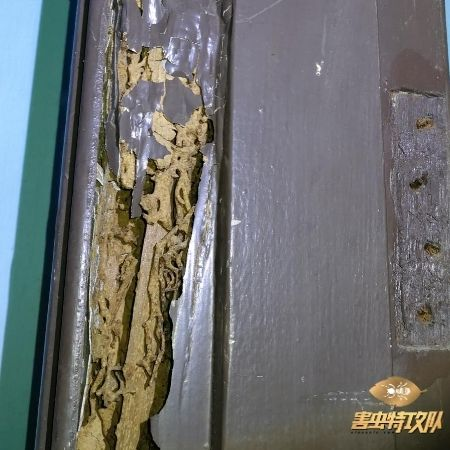 Termite In Door Frame 如何消灭白蚂蚁