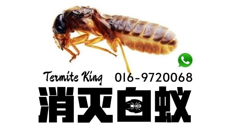 如何消灭白蚁 termite control near me