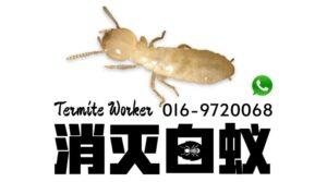 新山白蚁专家 新山灭蚁公司
