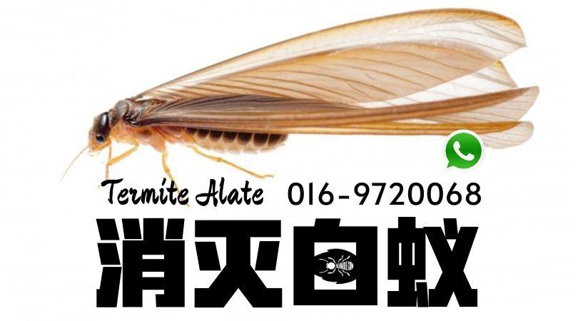 Termite Control 消灭白蚁