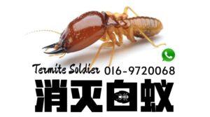 pest control johor bahru Termite Control 预防白蚁