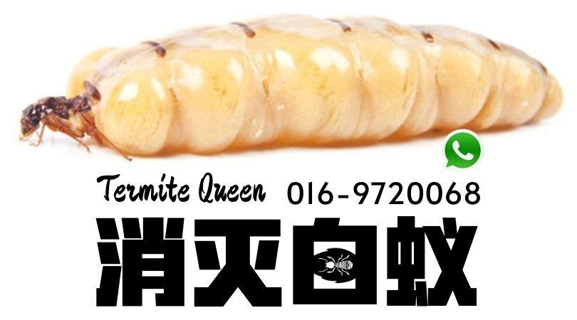 termite prevention 白蚁预防termite prevention 白蚁预防