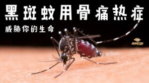 how to prevent dengue fever from aedes mosquito 黑斑蚊用骨痛热症 威胁你的生命