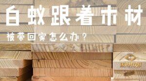 termites get into your house 白蚁跟着木材被带回家怎么办