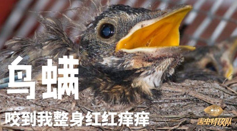 如何消灭鸟螨 ! 身体出现红点被什么咬 Haw do get rid for bird mite fleas bites